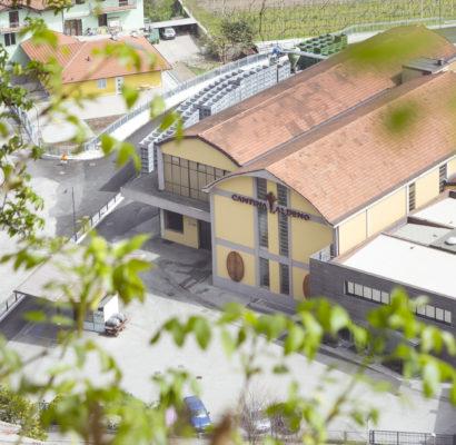 foto per azienda vinicola aldeno